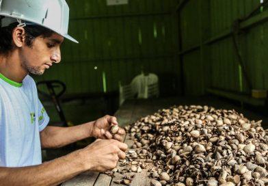 Governo apoia Cooperativa Nova Cintra para produção sustentável e geração de renda