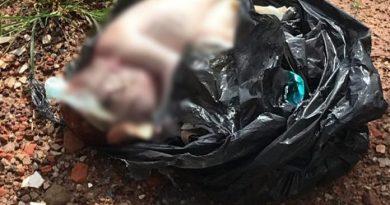 Bebê recém-nascido é encontrado morto dentro de saco de lixo na Capital