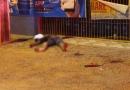 Eletricista é morto com tiro de escopeta no pescoço durante assalto em distribuidora